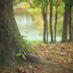 Prześliczny i {schludny ogród to nie lada wyzwanie, zwłaszcza jak jego konserwacją zajmujemy się sami.